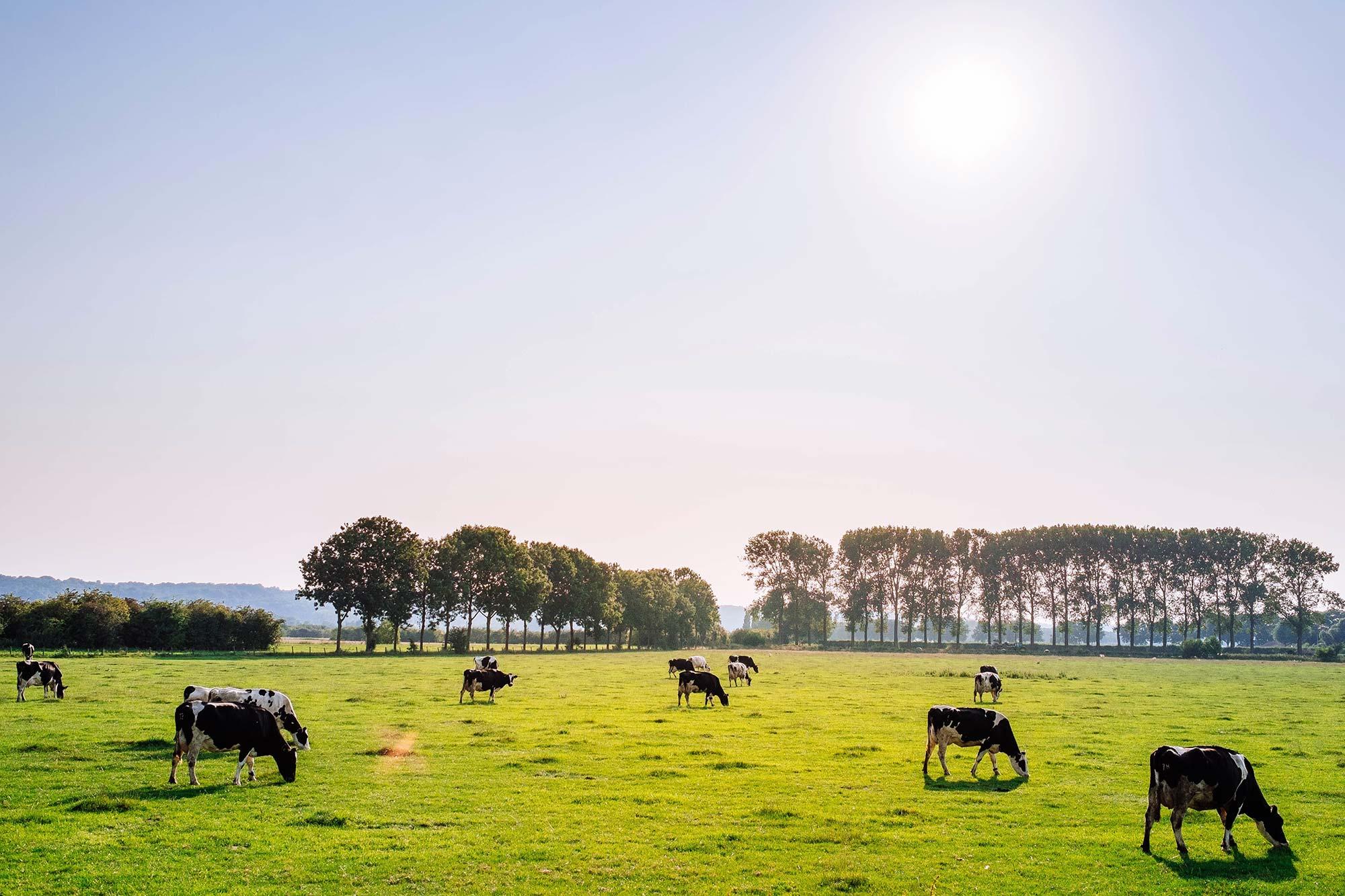 oak-run-dairy-farm